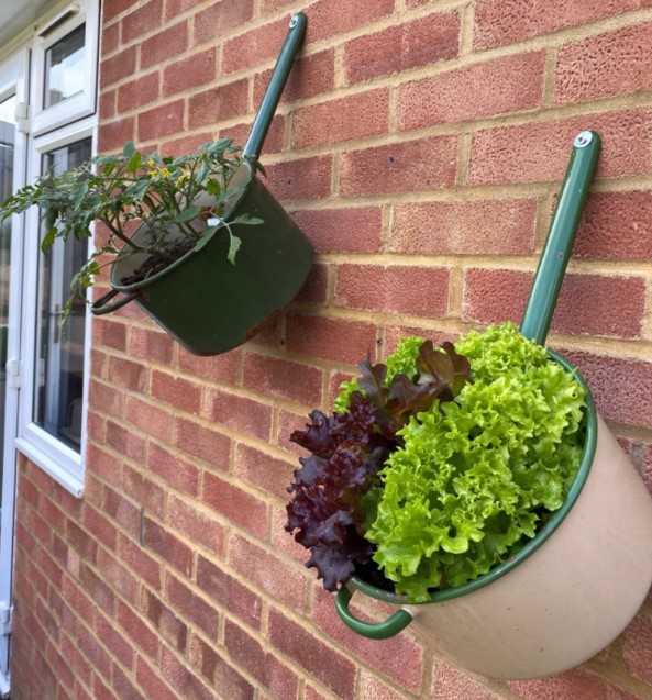 Staff member repurposed some old saucepans to use as planters for lettuce and trailing tomatoes